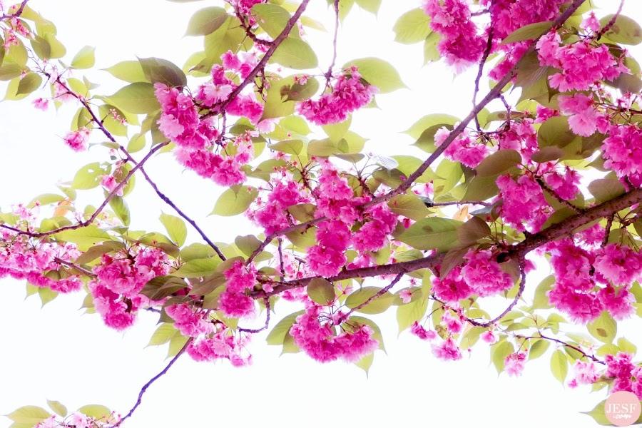 tendances-Mode-printemps-été-Grandes-Tailles-rondes-curvy