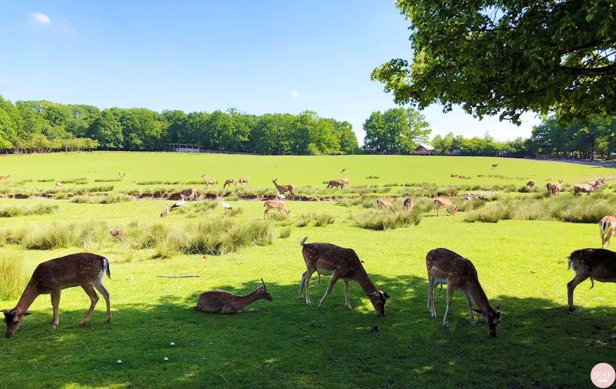 avis-sejour-moselle-voyager-en-famille-parc-animalier-sainte-croix